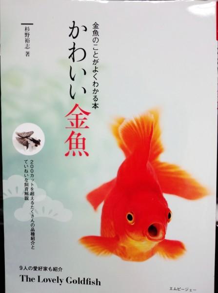 かわいい金魚.jpg